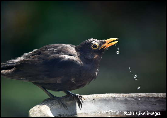Thirsty weather by rosiekind