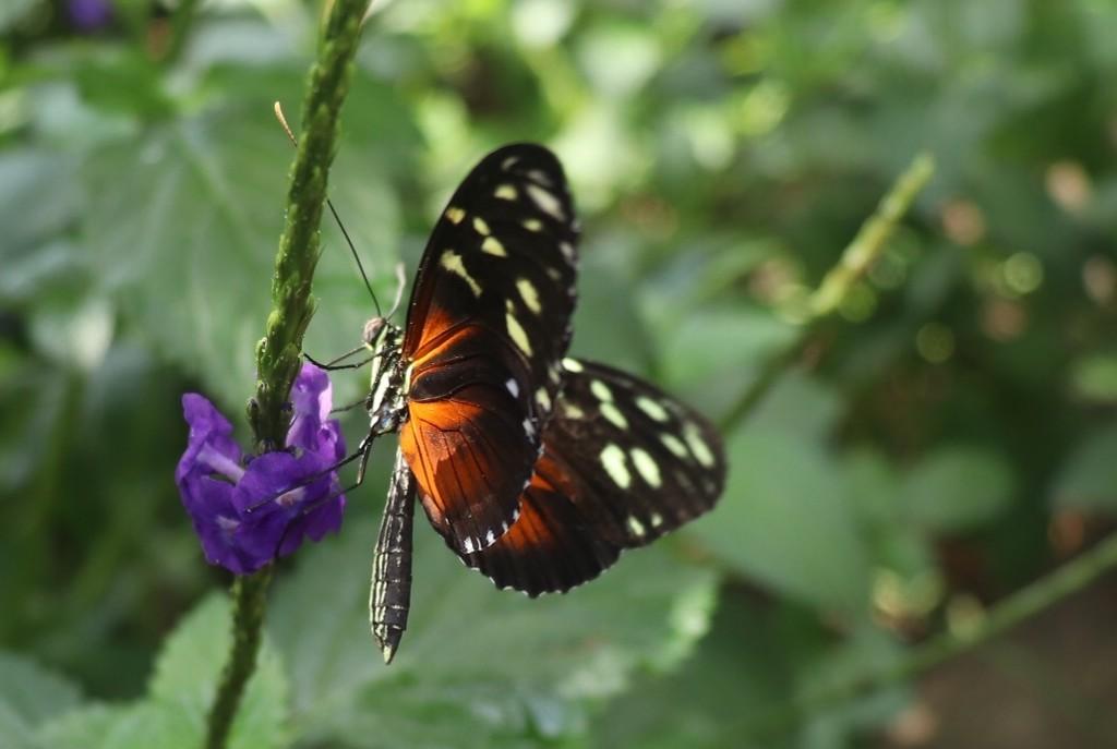 Butterfly by chloette