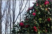 28th Jun 2018 - Winter Garden VI - Contrasts