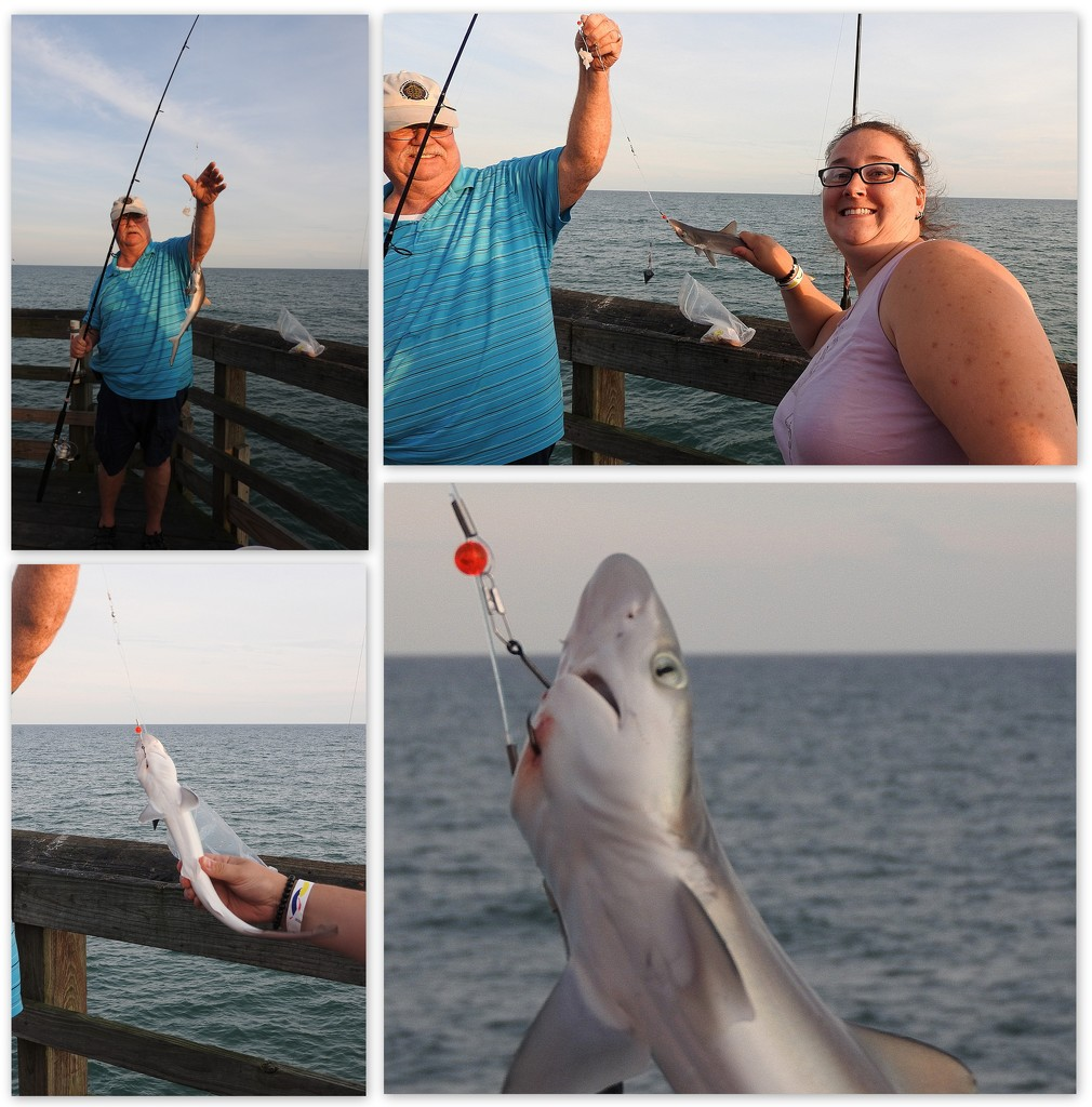 Catch of the Day by homeschoolmom