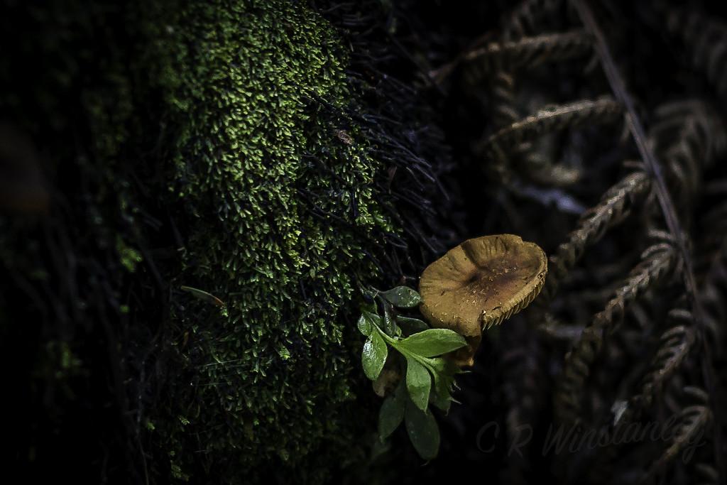 Small Tree Fungi by kipper1951