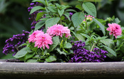 2nd Jul 2018 - Flowers in the planter