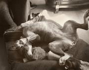 2nd Jul 2018 - The Dog's Comfort