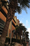 30th Jun 2018 - Myrtle Beach has palm trees!