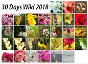 1st Jul 2018 - 30 Days Wild 2018