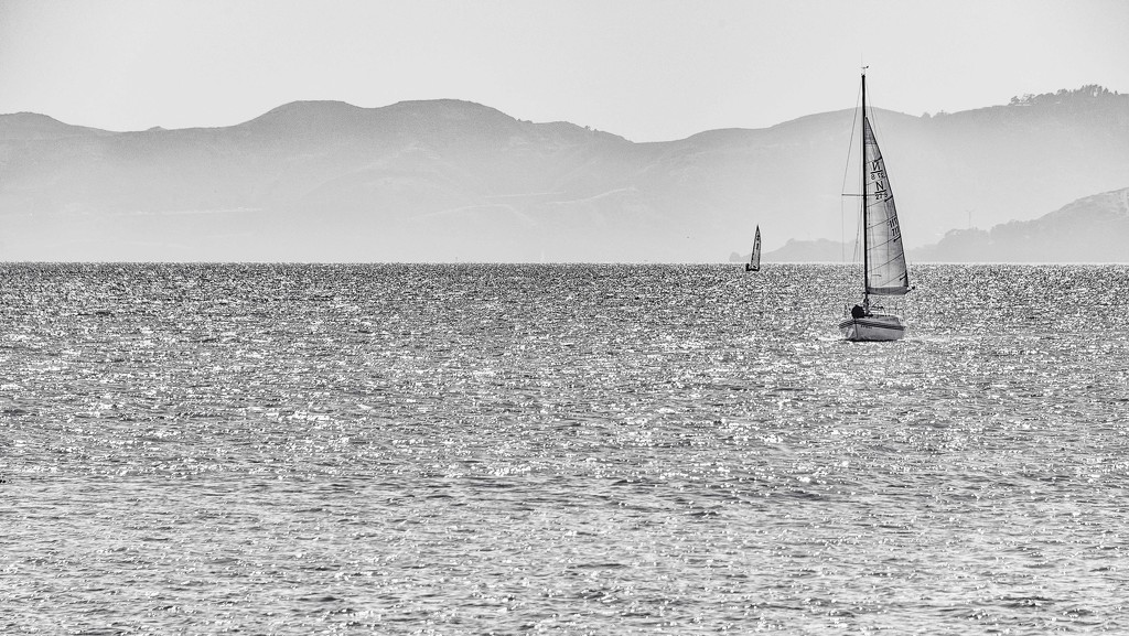 Sailing in the Bay  by taffy