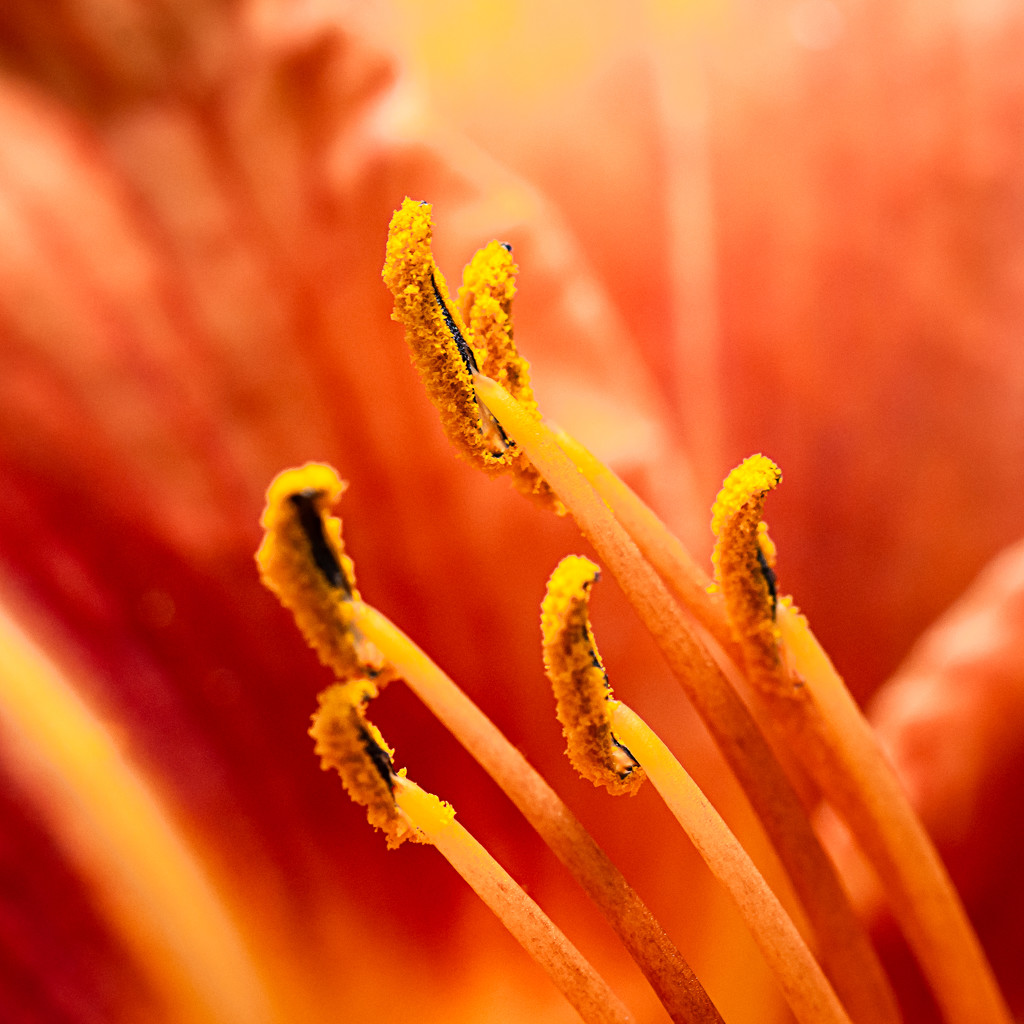 Paimpont 2018: Day 160 - Stamens by vignouse