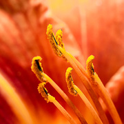 4th Jul 2018 - Paimpont 2018: Day 160 - Stamens