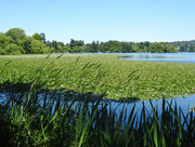 5th Jul 2018 - Summer On Green Lake