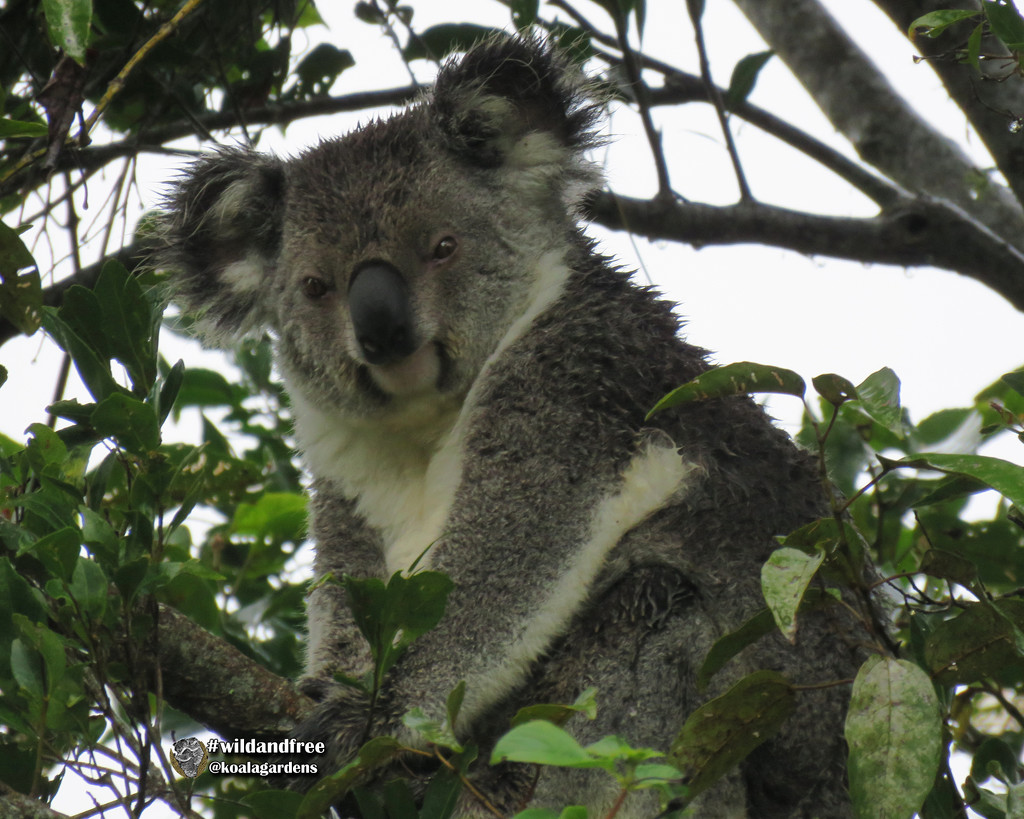 does the wet look suit me? by koalagardens