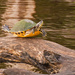 Turtle Yoga! by rickster549