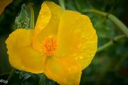 6th Jul 2018 - Yellow flower