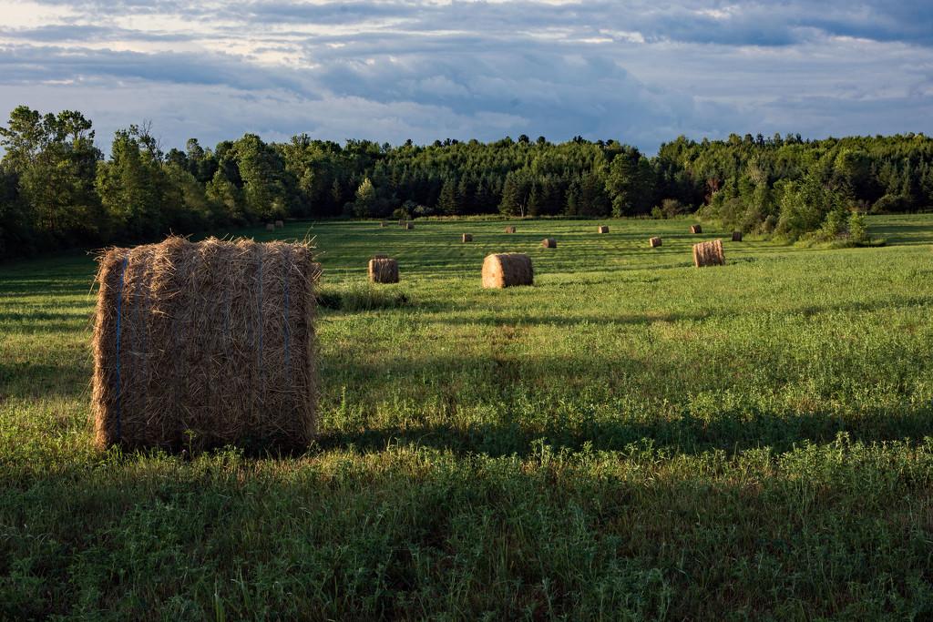 Haying Time Again by farmreporter