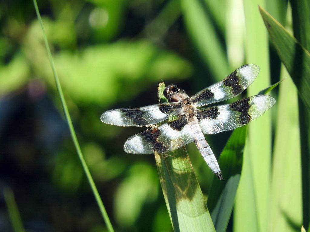 Dragon Fly by seattlite