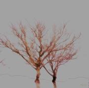6th Jul 2018 - Trees survive winter, bare…. I don't!