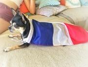 7th Jul 2018 - Super-frenchy dog.
