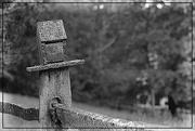 5th Jul 2018 - A Lichen Covered Birdhouse at Hurdle Hill Farm