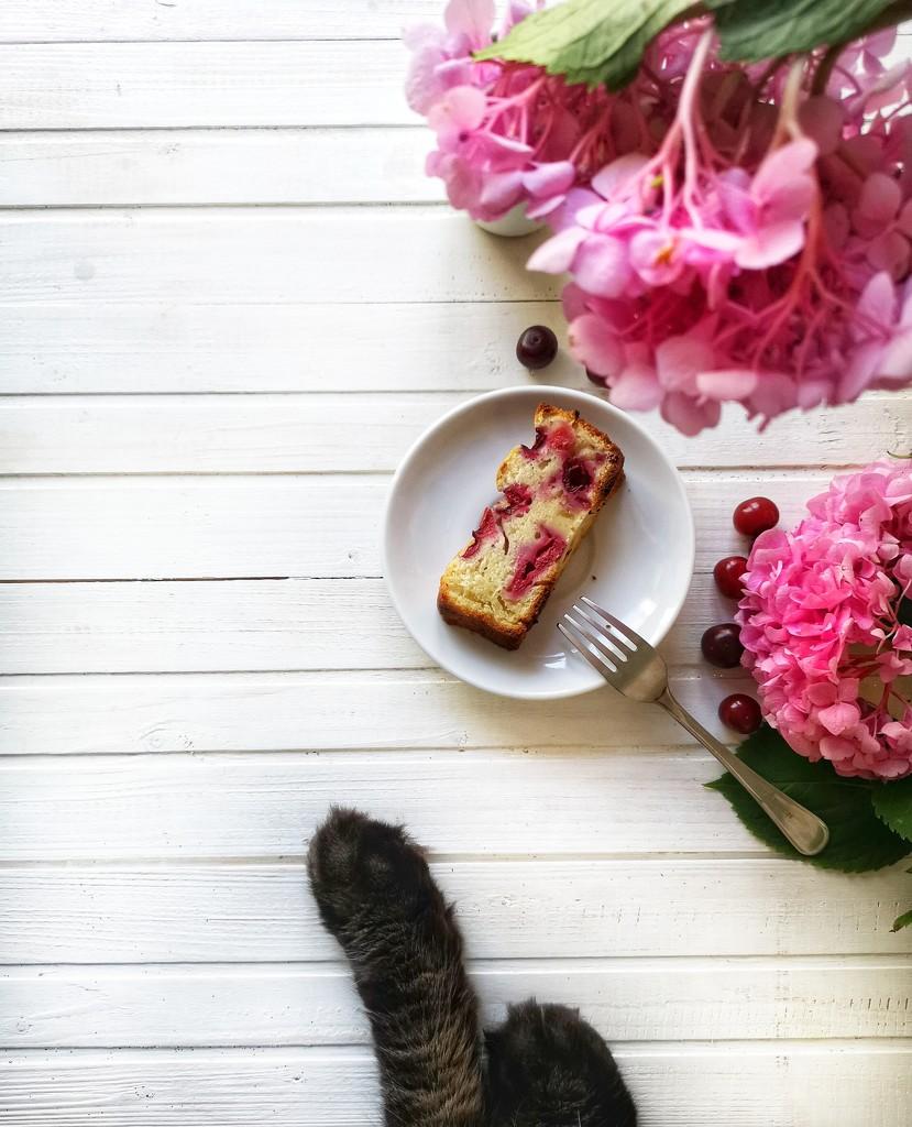 Delicious morning  by olenadole
