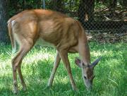 7th Jul 2018 - Oh Deer...