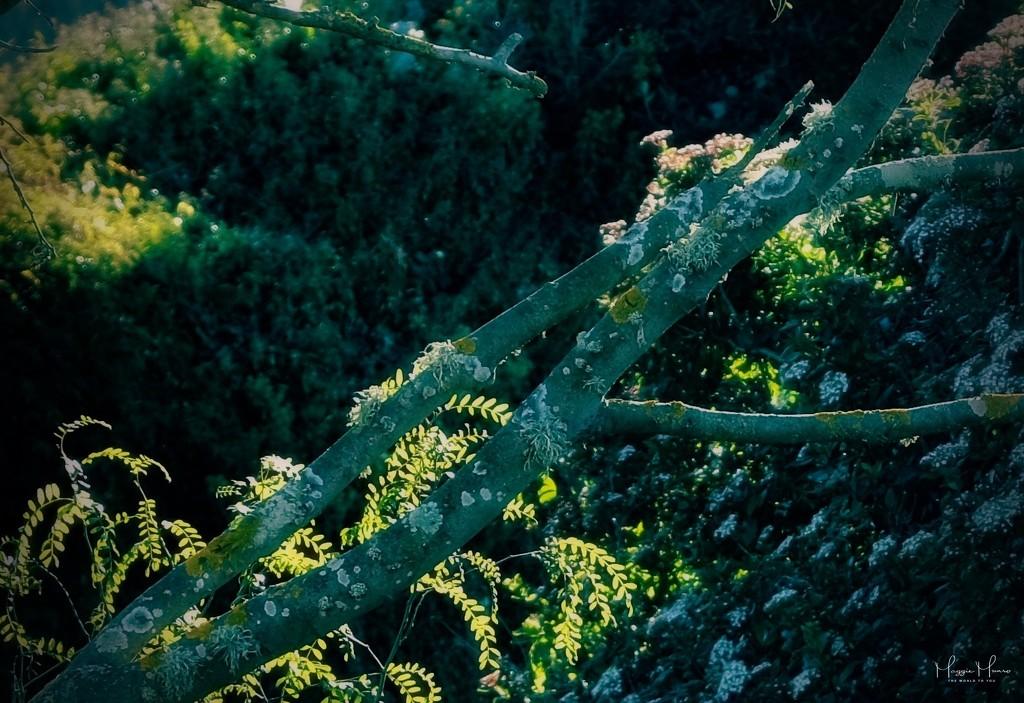 Branch design by maggiemae