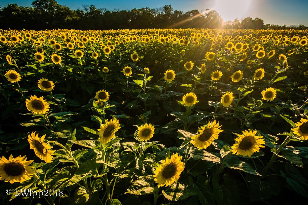 My Field Of Dreams  by lesip