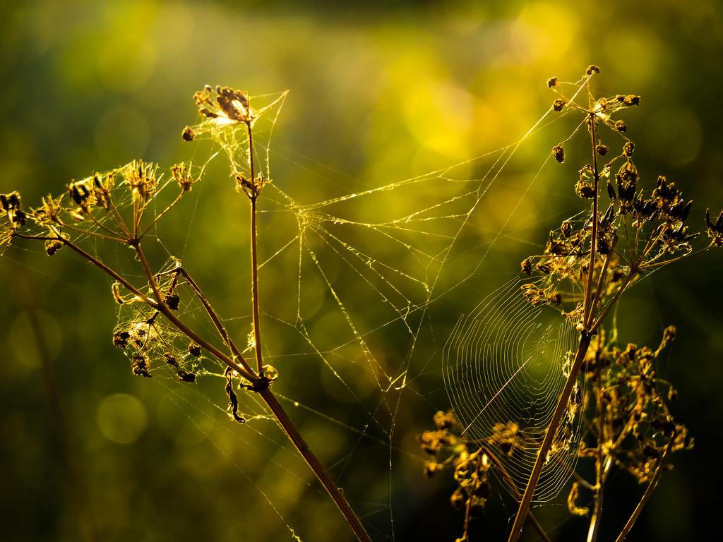 In the morning sun by haskar