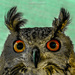 Mesmerising Eyes by carolmw