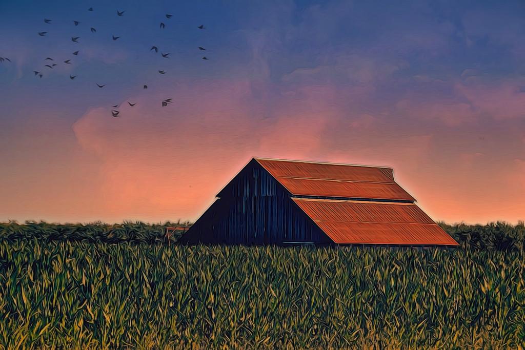 Corn Field by joysfocus
