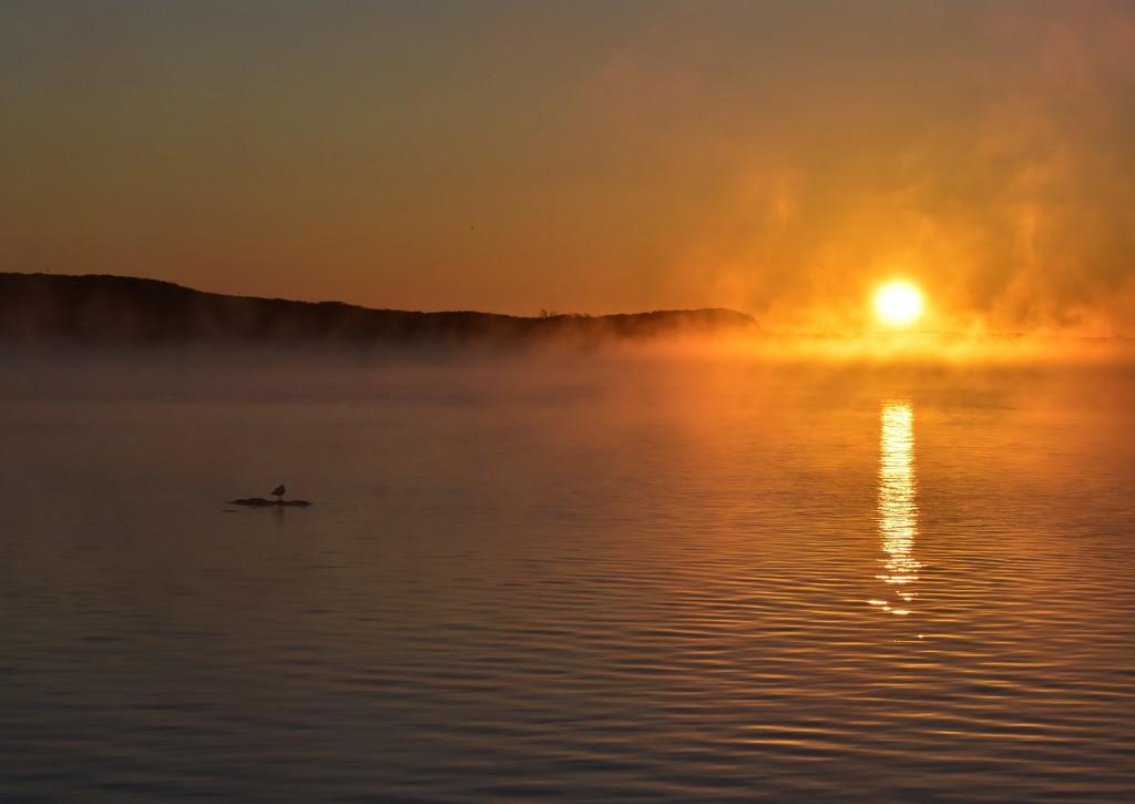 Surreal Sunrise _DSC2518 by merrelyn