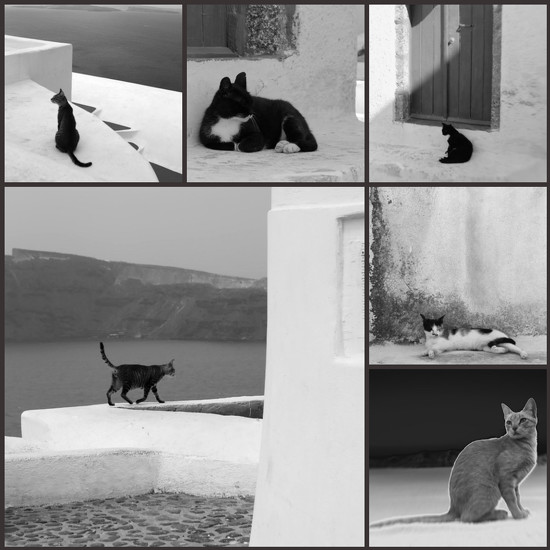 cats of santorini bw by blueberry1222