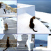 cats of santorini by blueberry1222