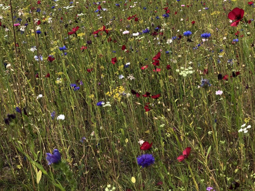 Wildflower mini meadow by bizziebeeme