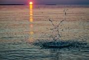 10th Jul 2018 - Water Creature Enjoying the Sunset