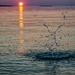 Water Creature Enjoying the Sunset