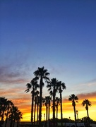 12th Jul 2018 - Palmtrees and sunset.