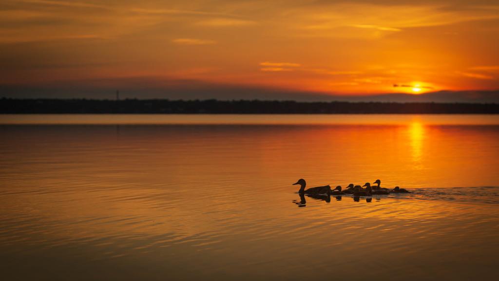swim at dawn by adi314