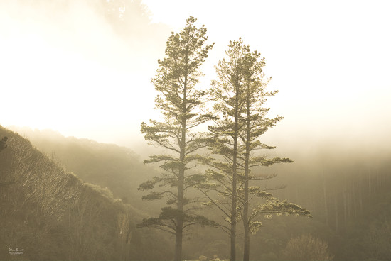 Mist and trees by dkbarnett