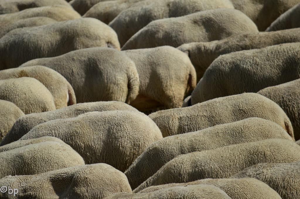 Sheep mini-textform by caterina