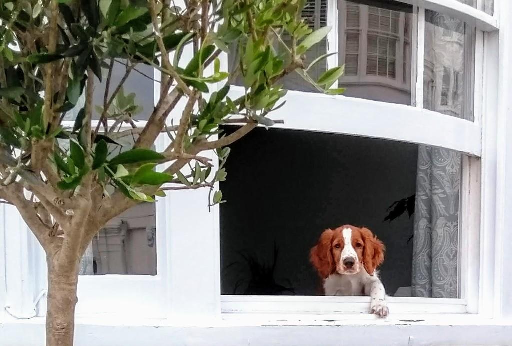 Dog In the Window II by 4rky