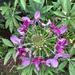 Funky Flower #2