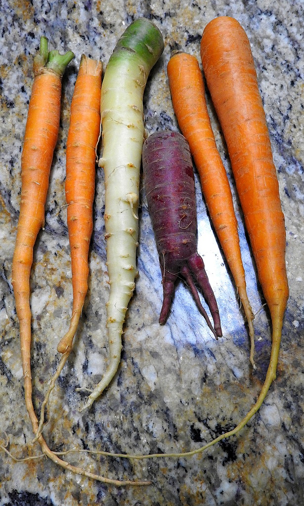 Carrots by homeschoolmom