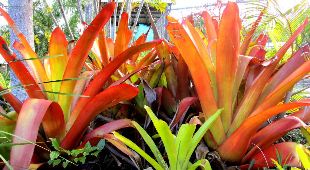 Colourful Bromeliads by 777margo