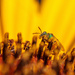 all that pollen