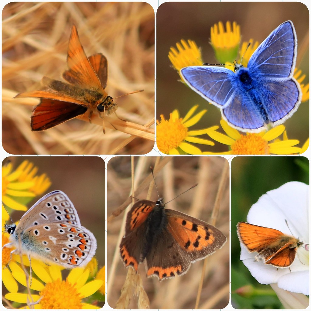 Airfield butterflies by mave
