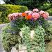 Spanish flower pot in our garden