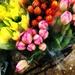 Fresh Tulips