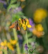 14th Jul 2018 - Butterfly day