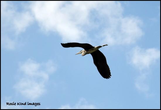 Free as a bird by rosiekind