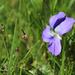 Little wildflower in grass
