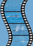 9th Jul 2018 - whales